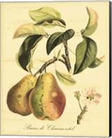 Petite Tuscan Fruits IV Fine Art Print