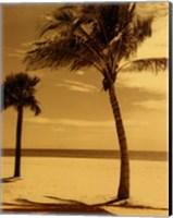 Palm Beach I Fine Art Print