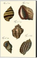 Neptune's Treasure IV Fine Art Print
