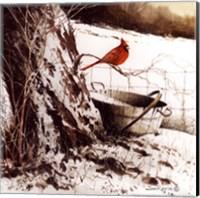 Country Cardinal Fine Art Print
