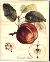 Custom Tuscan Fruits I (AO) Fine Art Print