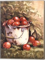 Pail of Apples Fine Art Print