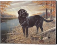 Black Lab with Decoys Fine Art Print