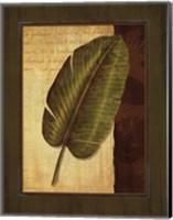 Palm Tropical II Fine Art Print