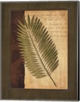 Palm Tropical III Fine Art Print