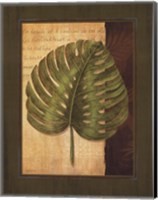 Palm Tropical IV Fine Art Print