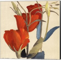 Red Grandiflorum Fine Art Print