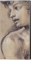 Head of a Young Man Fine Art Print