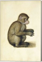 A Monkey Fine Art Print