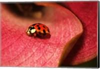 Ladybug On Leaves Fine Art Print