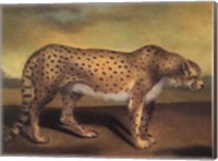 Cheetah Fine Art Print