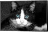 Curiosity Teased the Cat Fine Art Print