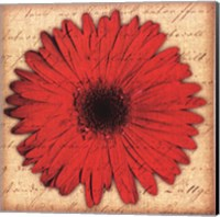 Red Gerbera Fine Art Print