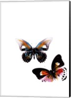 Butterflies Dance VI Fine Art Print