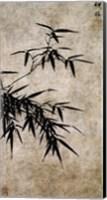 Xia Chang- Ink Bamboo Fine Art Print