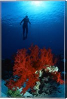 Soft Coral Red Sea Fine Art Print