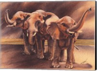 Family of Elephants Fine Art Print