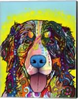 Bernese Mountain Dog Fine Art Print