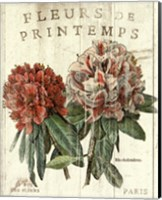 Fleur de Printemps Fine Art Print