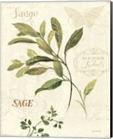 Aromatique IV Fine Art Print