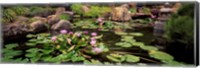 Lotus blossoms, Japanese Garden, University of California, Los Angeles, California Fine Art Print