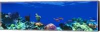 Underwater, Caribbean Sea Fine Art Print