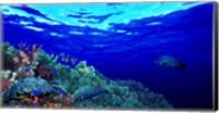Underwater view of Longfin bannerfish (Heniochus acuminatus) with Red Firefish (Nemateleotris magnifica) and soft corals Fine Art Print