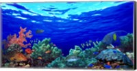 Underwater view of Pallid triggerfish, Oriental Sweetlips and Longfin bannerfish with Yellowbar Angelfish Fine Art Print