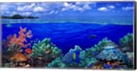 Underwater view of Yellowbar Angelfish with Tiger Grouper and Oriental Sweetlips (Plectorhinchus Vittatus) Fine Art Print