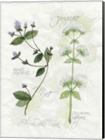 Oregano & Mint Fine Art Print