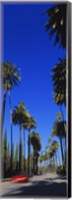 Palm trees along a road, Beverly Hills, Los Angeles County, California, USA Fine Art Print