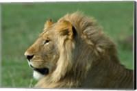 Kenya, Masai Mara Game Reserve, Lion Fine Art Print