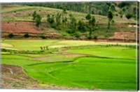 People working in green rice fields, Madagascar Fine Art Print