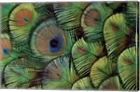 Peacock Feather Design Fine Art Print