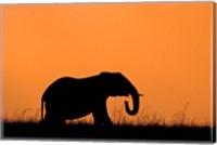 Silhouette of Elephant at sunset, Masai Mara National Reserve, Kenya Fine Art Print