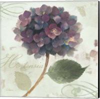 Abundant Hydrangea II Blue Green Fine Art Print