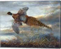 Taking Flight Fine Art Print
