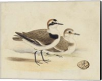 Meyer Shorebirds V Fine Art Print