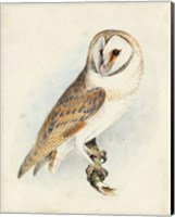 Meyer Barn Owl Fine Art Print