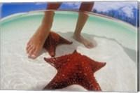 Starfish and Feet, Bahamas, Caribbean Fine Art Print