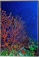 Underwater, Bonaire, Netherlands Antilles Fine Art Print