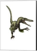 Velociraptor, white background Fine Art Print