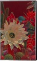 Stella's Garden Fine Art Print