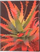 Sunset Agave Fine Art Print