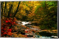 Mountain Stream Fine Art Print