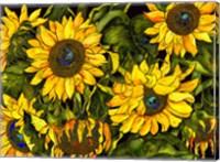 Sunflowers On a Field of Green Fine Art Print