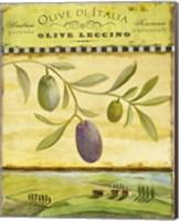 Olive Grove Tuscana Fine Art Print