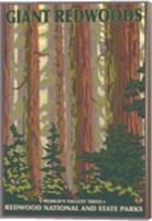 Giant Redwoods Fine Art Print