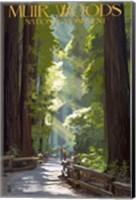 Muir Woods National Monument Fine Art Print
