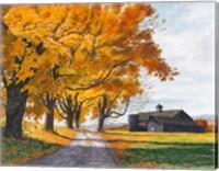 Golden Maples Fine Art Print